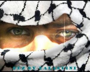 كل فلسطين