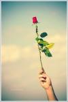 هدية... محب
